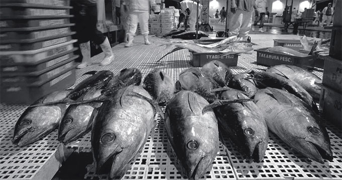 Pescado CEAGESP